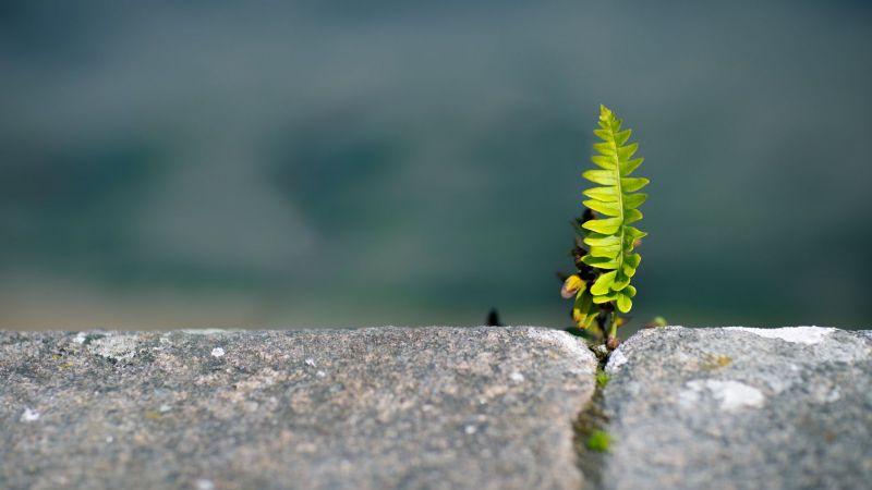 Kleine Pflanze wächst in Ritze zwischen Steinen (Symboldbild)