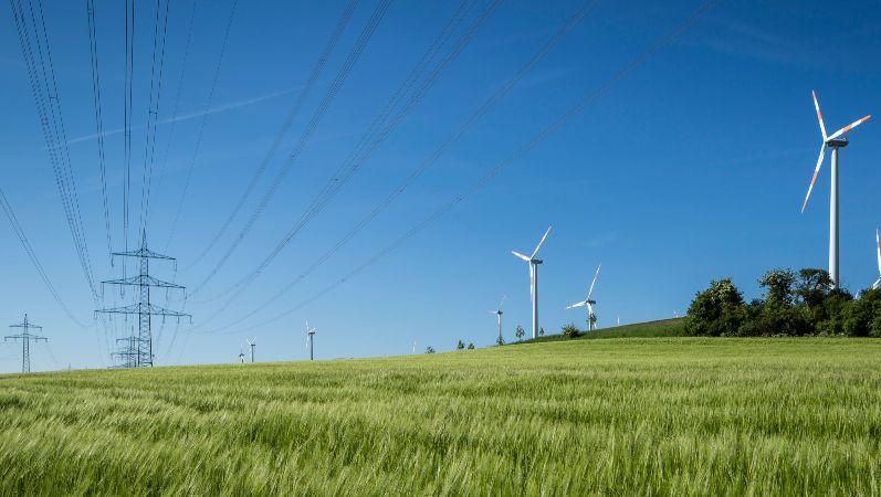 Freileitungen auf einer Wiese neben vielen Windenenergieanlagen.